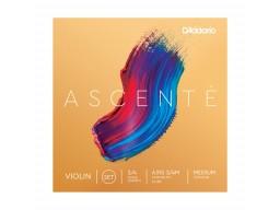 A310 Ascente 3/4M